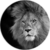 Website The Lion